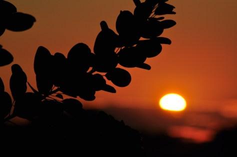 sunset_aug_mumof2