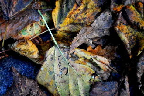 autumn_leaves_mumof2