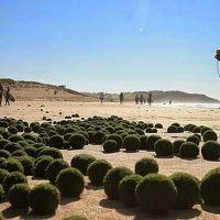 Algas extremadamente raras en la playa de Sydney