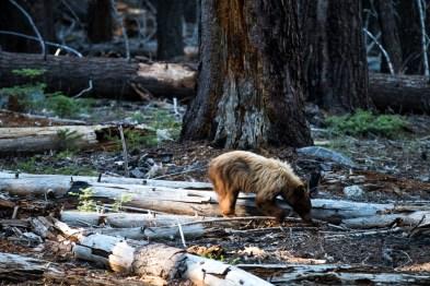 Grande quantidade de madeira morta no solo