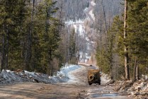 Estrada pelo meio da floresta