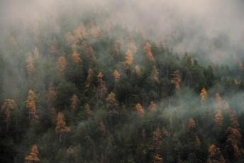 Trees-Of-Autumn