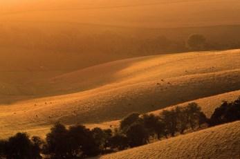Glowing-Farmland