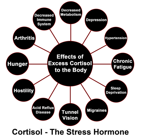 effects-of-cortisol