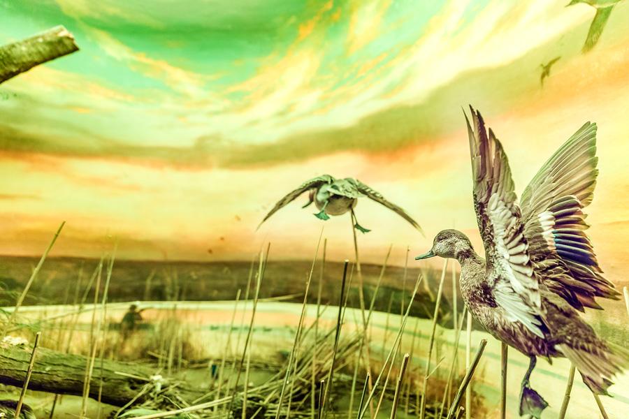 """""""Aves Acuáticas"""" Fotografía  Jaime Salas Pavón   jsalaspavon.com"""