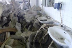 LA BALLENA DE MUSEO DE CIENCIAS DE LOS YEBENES 2007 almacenes de arganda  museo de ciencias