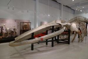LA BALLENA DEL MUSEO DE CIENCIAS DE LOS YEBENES