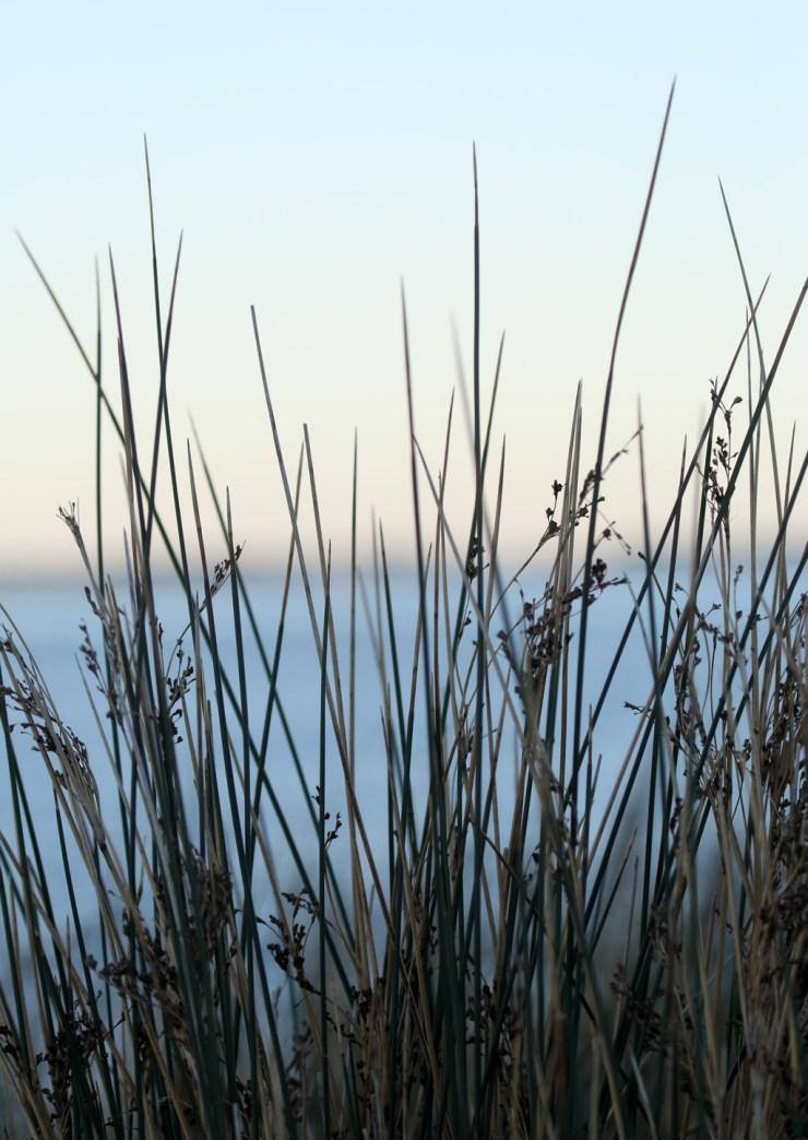 Reeds_4L2A0838