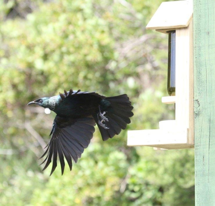 birdy6