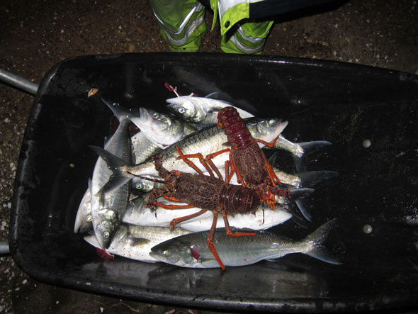 Oakura Bay Fishing Trip