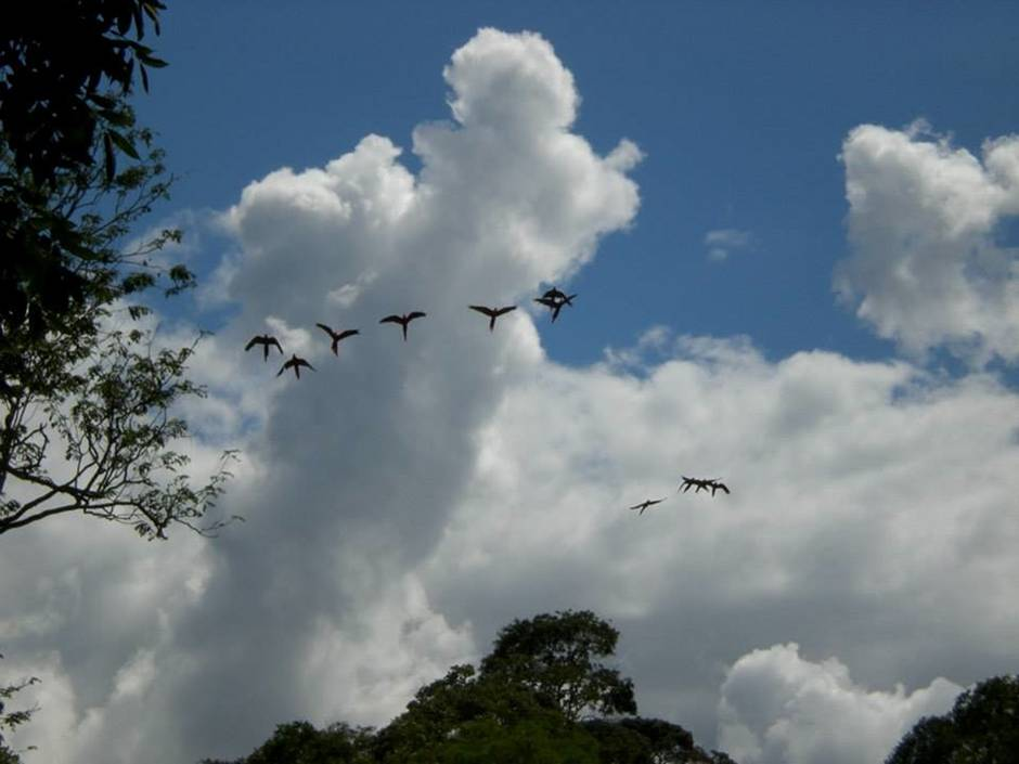 Honduras attractions: macaws flying above the site