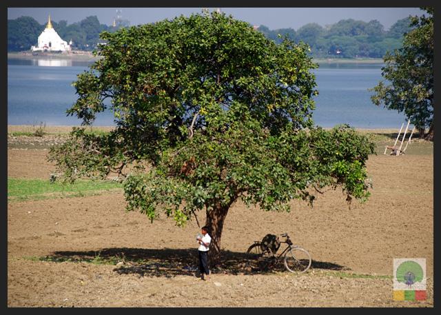 U Bein Teak Bridge - Farmer under Tree - Amarapura - Mandalay - Myanmar (Burma)