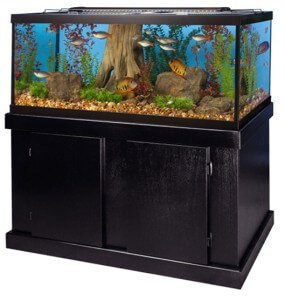 14 Stunning 75 Gallon Aquariums Reviewed & Shortlisted