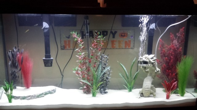 Ideas For 60 Gallon Tank | My Aquarium Club