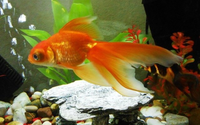 How Do You Keep A 55 Gallon Fish Tank Clean In The Cheapest Ways? | My