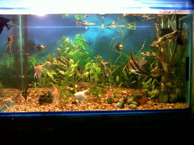 Sale 90g Fish Tank | My Aquarium Club
