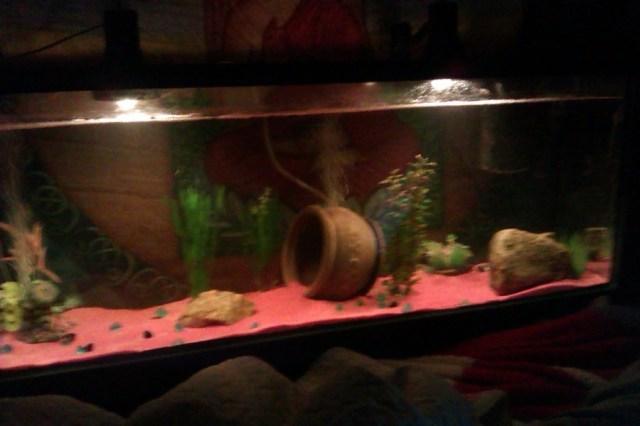 55 Gallon Tank, Getting A Frontosa Or An Oscar,    My Aquarium Club