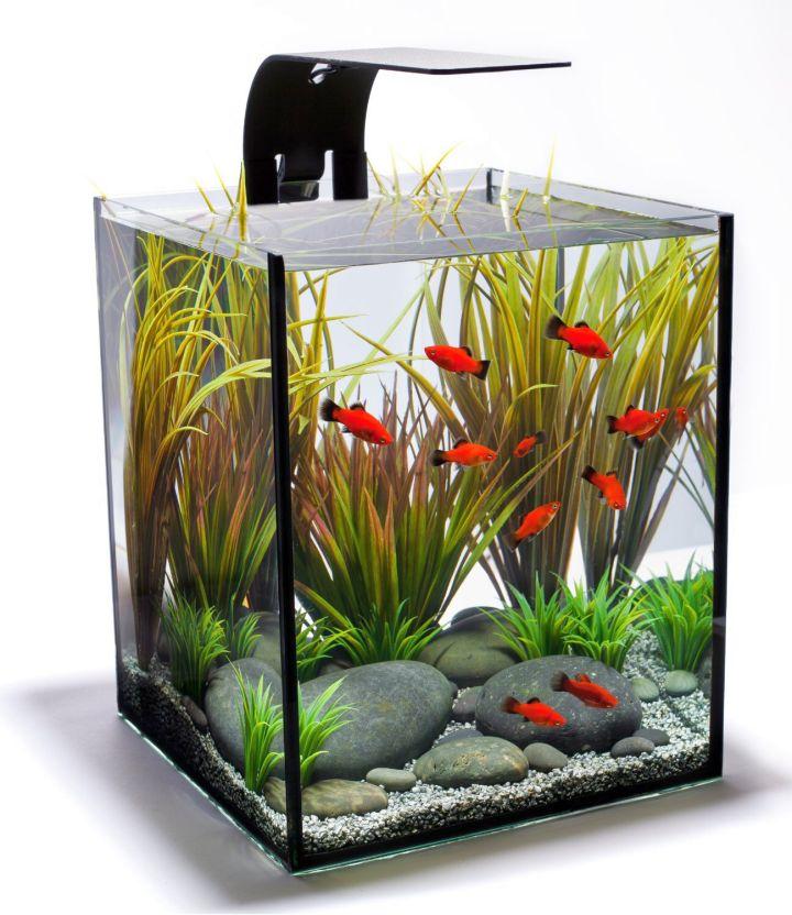 17 pleasing contemporary fish tank ideas for Contemporary fish tank