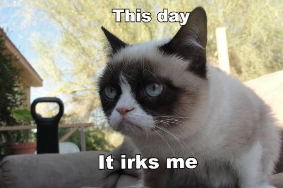 tard grumpy cat hump day