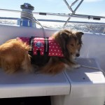 Boating with Your Dog – How to Keep it Fun & Safe