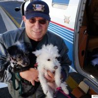 Wings of Rescue for Dogs and Cats