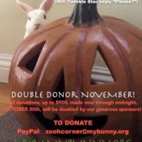 Double Donor November 2017