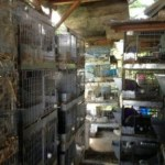 Squalid Rabbit Breeding in Sherman Oaks, CA