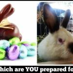 Preparing for Easter?
