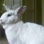 Petition to End Rabbit Meat Sale at Wholefoods