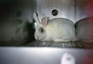 PETA animal testing