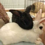 This Sunday – FREE Bunny Bonding Seminar