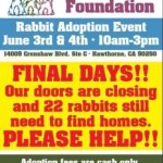 PetSave Foundation Adoptions Needed