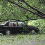 A tree lies on a car on Terrace Avenue in Naugatuck after Tropical Storm Irene. The state is holding two hearings to review its preparedness for and response to the storm.  RA ARCHIVE