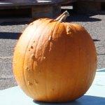 NEWS_pumpkinpatch2