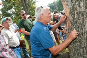 Bud Neal, of Neal Tree Service, shaves the bark of an ash tree to reveal the serpentine galleries created from the Emerald Ash Boarer which destroyed the tree on Prospect Street in Naugatuck last week. Neal showed area professionals and residents how to deal with Emerald Ash Boarer found in area trees. Neal's plan is to help reduce the number of infestations by teaching how to properly remove the trees without spreading more bugs to other areas. –RA ARCHIVE