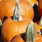 SLIDE_Pumpkins