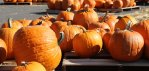Festival to raise Halloween spirit