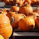 SLIDE_Pumpkins