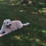 SLIDE_NEWS_DogPark