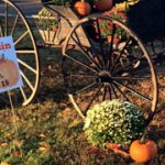 feat_pumpkinfest