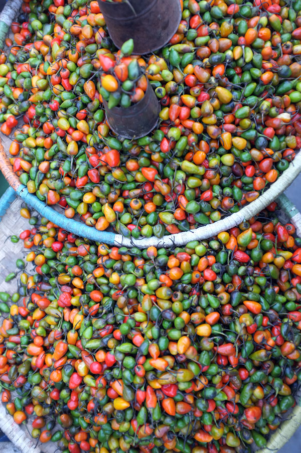 colourful-chilies