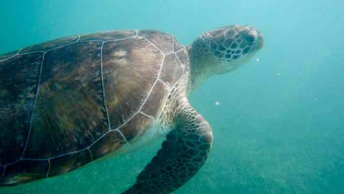 Akumal, the Place to Meet Wild Turtles in Mexico