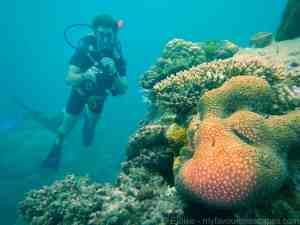 cairns_-_diving_great_barrier_reef_-_coral_+_ben (c)