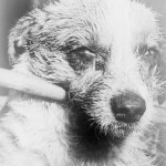 rabies vaccines china beijing expat