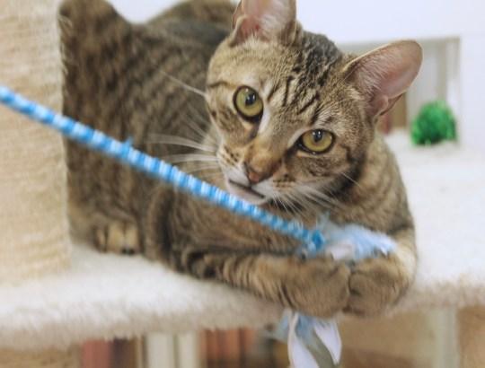 playful prime cat
