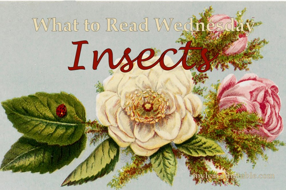 What to Read Link Up: Insects mylearningtable.com