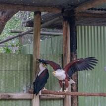 eagle power 2