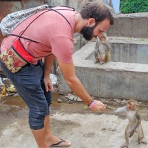Jaipur-monkey feeding