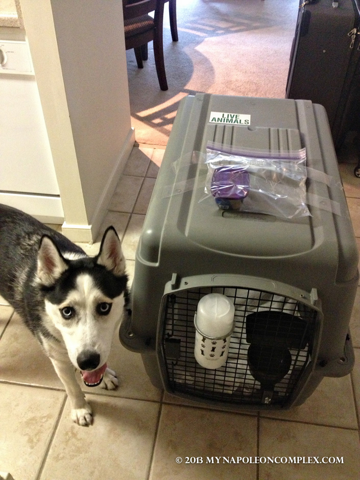 Picture of Husky with her kennel