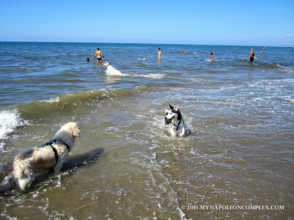 Bau Beach: A Beach for Dogs Near Rome